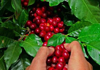 Как подбираме нашите кафета