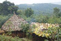 Етиопия – люлката на кафето