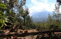 Гватемала – място на много дървета