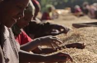Eдна любовна песен към етиопското кафе
