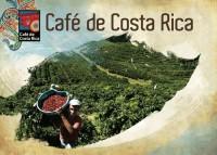 Коста Рика – една истинска кафе република