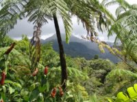 Папуа-Нова Гвинея – кафе, отгледано под сянката на тропическите дървета