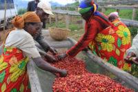 Бурунди – уникална природа и кафе с комплексни вкусове