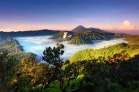 Кафе от Индонезия  – един от най-старите производители в света